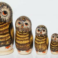 Forest owls